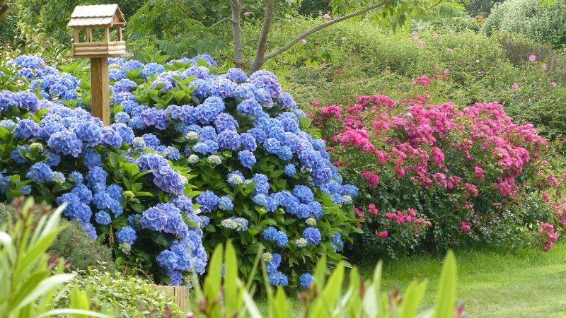 chambres d'hotes fleuries dans le finistere sud